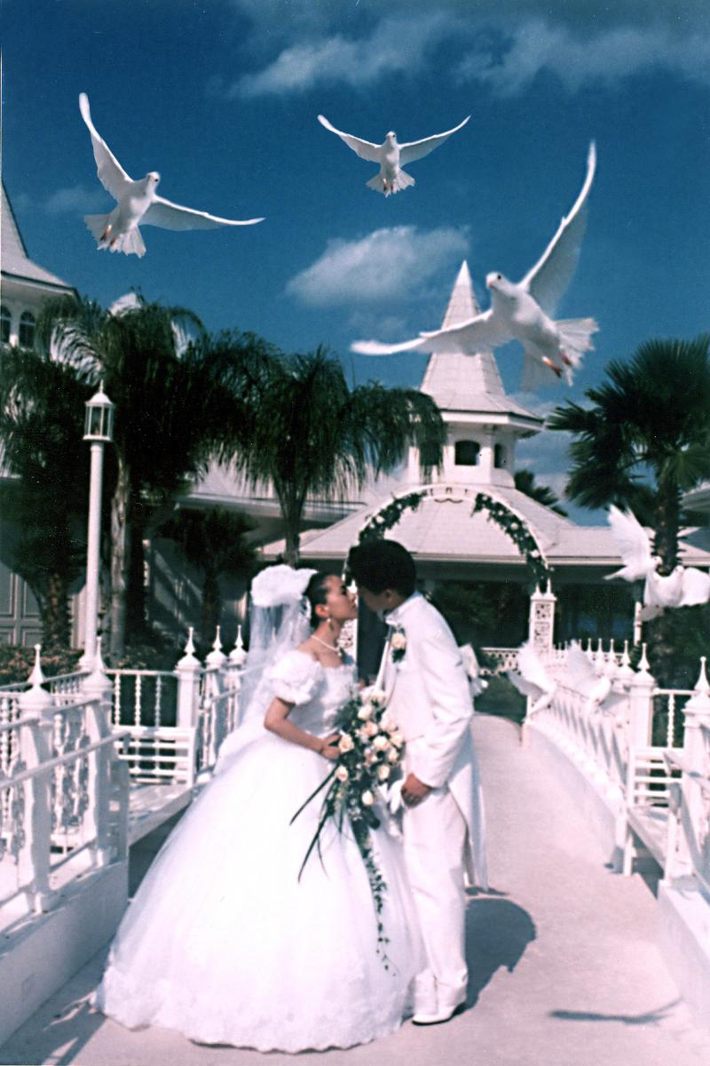 Orlando White Dove Releases Has Been In Business For 35 Years Creating Many Special Memories